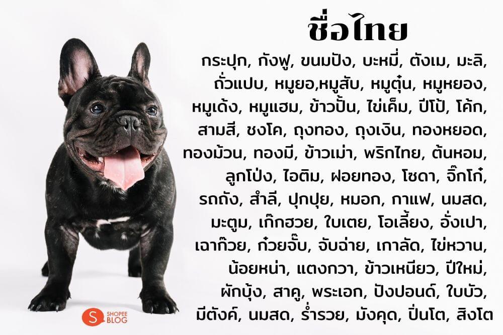 ตั้งชื่อหมาภาษาไทย